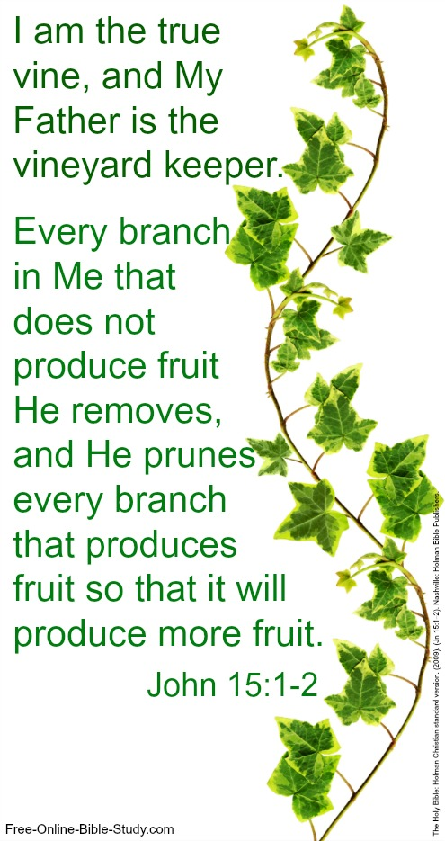 John 15:1-2